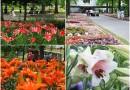 「とっとり花回廊」でユリの花が見頃を迎えています♪