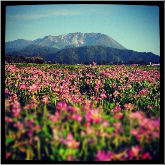 レンゲの香りに包まれた大山、行楽日和です…♪